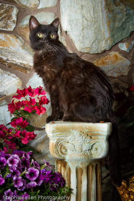 Black Cat pedestal stone wall flowers