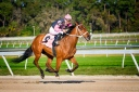 Horse_racing_Tampa_Bay_Downs
