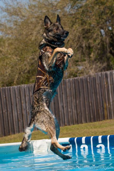 splash_dogs_lutz_curious_canine_stephaniellen_photography-9835